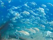 The Gold Coast Waterworld: Ian Banks Diver