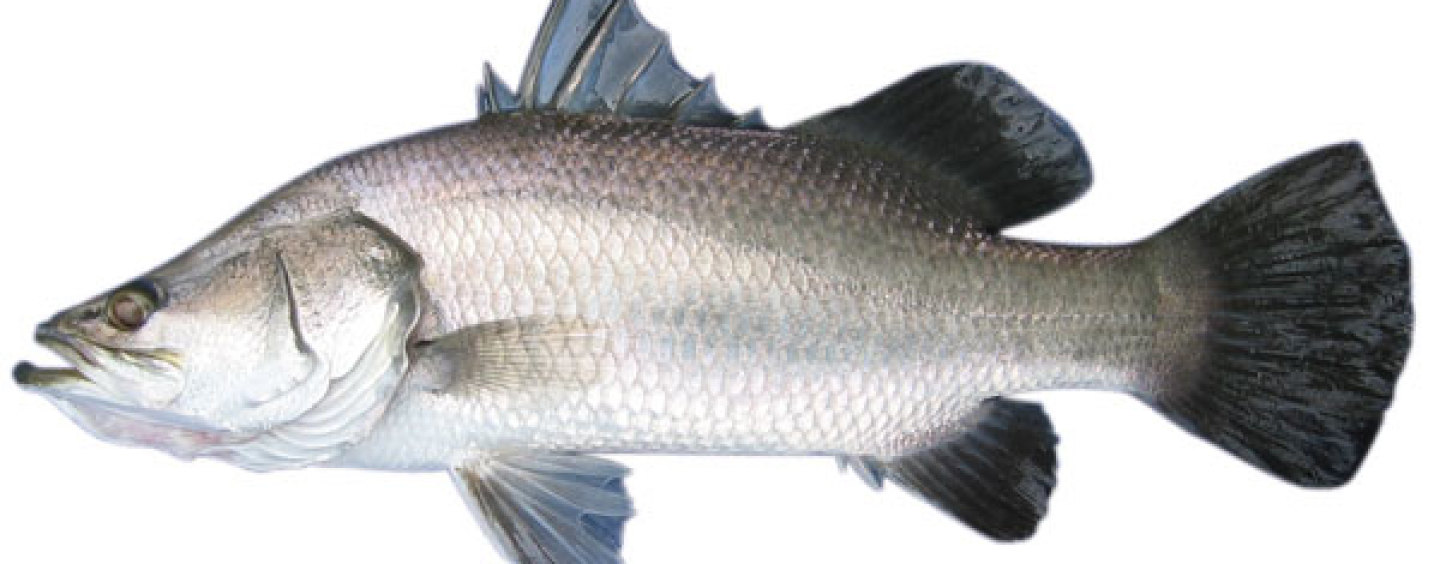 Fisheries management review update