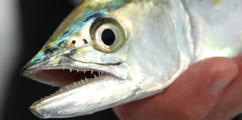Keen anglers ensure the future of our fisheries