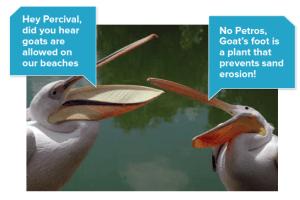 precival and petros