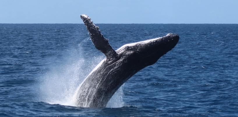 Whale Migration Safety Ensured