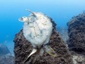 Avoid wildlife entanglements: Fish responsibly