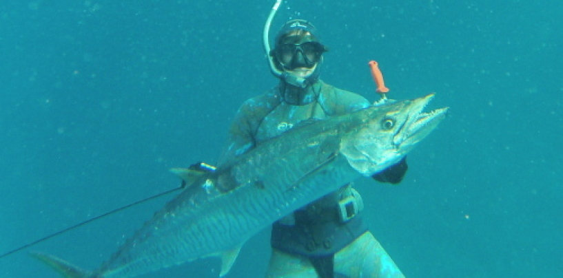 Spear Me The Details: Spearfishing on the Gold Coast