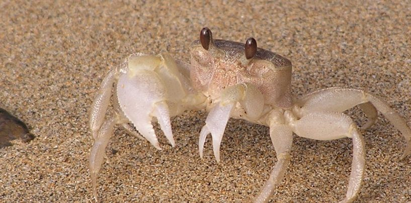 Ode To Crabs