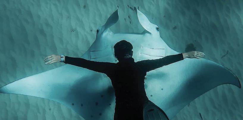 Sharks and Rays of Moreton Bay
