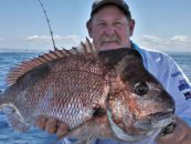 Snapper Fishing Season