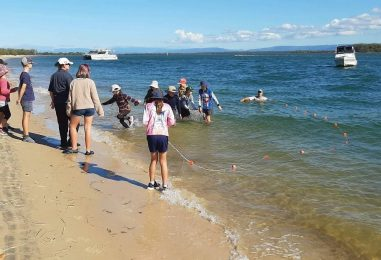 Straddie Study – A DAY TRIP TO DISCOVER ISLAND LIFE